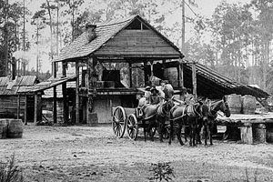 Turpentine Still in Thomas County, GA circa 1895