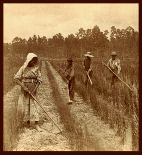 19th-century image of four Georgia rice field workers.