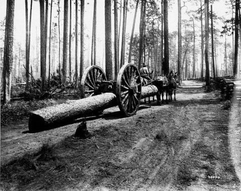 Sliptongue skidder working in the south Georgia pine forest.