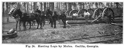 Hauling logs by mules. Ocilla, GA.