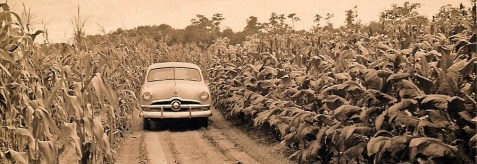 The Calhoun Farm, near Ray City, GA, 1955.