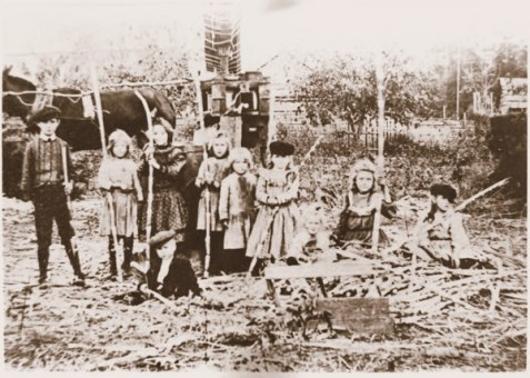 Children of the Cane. Children in Berrien County, as in other Wiregrass Georgia counties, looked forward to the sugar cane cutting with great anticipation. Pictured here are children of the Liles and Edson families together on the Leggett farm, Berrien County, GA. Image courtesy of http://berriencountyga.com/