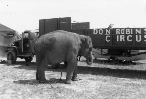 Don Robinson Circus at unknown location with a female elephant.   The elephant, called Laska, was given to Tift Park Zoo in Albany, Georgia after this 1952 season.  http://circustents.blogspot.com/