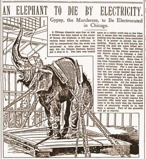 Gypsy the elephant slated for electrocution, May 6, 1897.