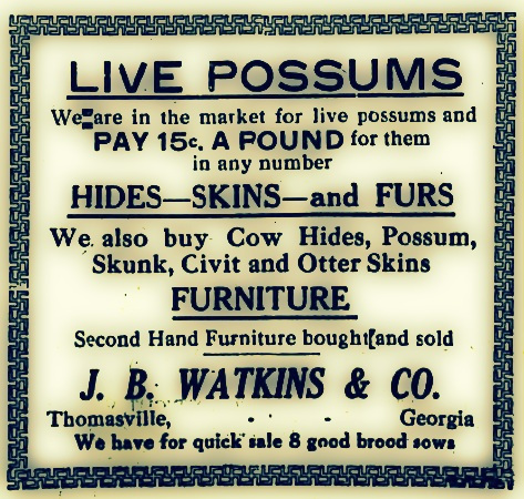 Live Possums Wanted.  The Thomasville Times-Enterprise, December 23, 1919.