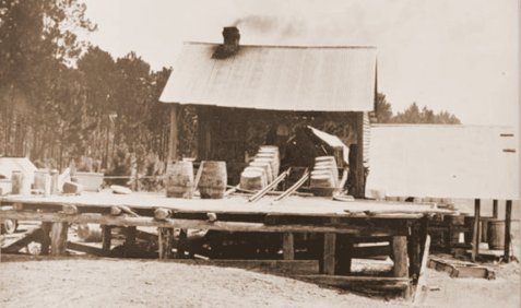 Early 1900s Turpentine Still in South Georgia. Image Source: Georgia Virtual Vault.