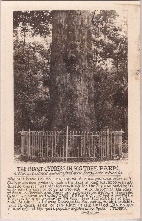 "1943 Pamphlet, ""The Giant Cypress in Big Tree Park"""